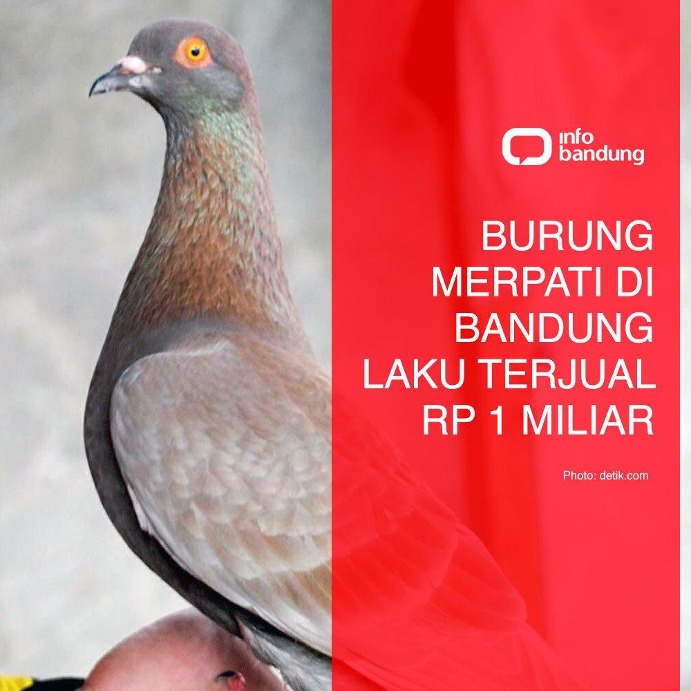 Unduh 60+ Foto Gambar Burung Merpati Jayabaya  Terbaru Gratis
