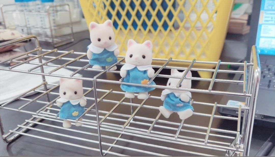 トイストーリー3「大学におもちゃなんて連れて行かない!」 ぼく「」