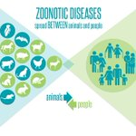 Image for the Tweet beginning: Zoonoses (zoonotic diseases) are diseases