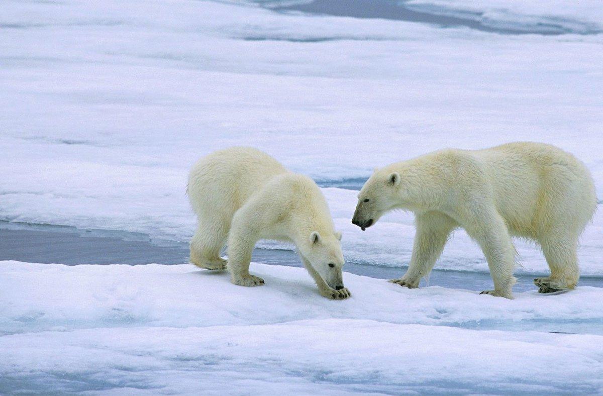 Climate Science's Myth-Buster | Guy Sorman http://cityjourn.al/2VxlbdS