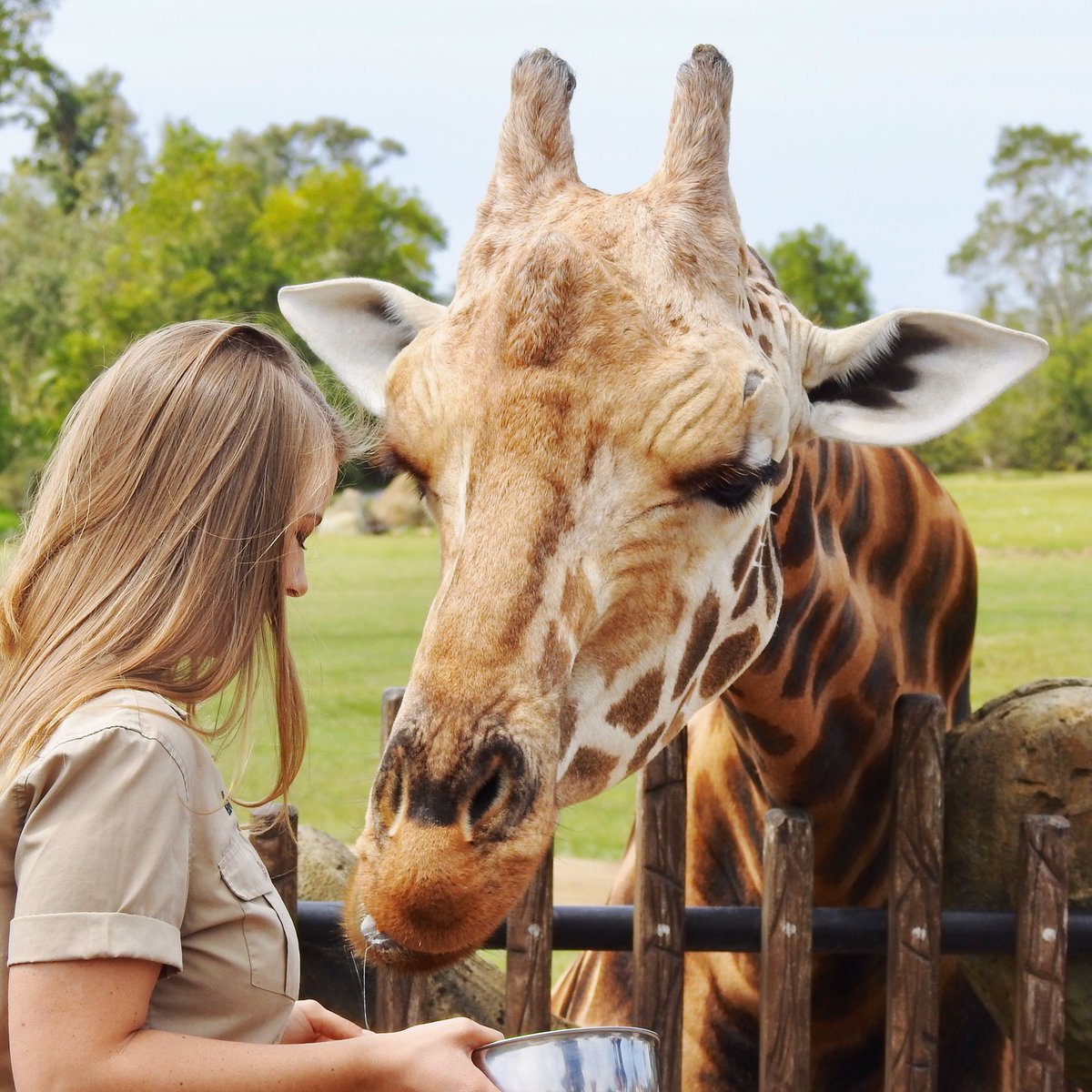 Lifelong memories made every day @AustraliaZoo ☀️ Had to capture this amazing moment one evening when @BindiIrwin and I were spending time with Forrest the giraffe.🦒💛