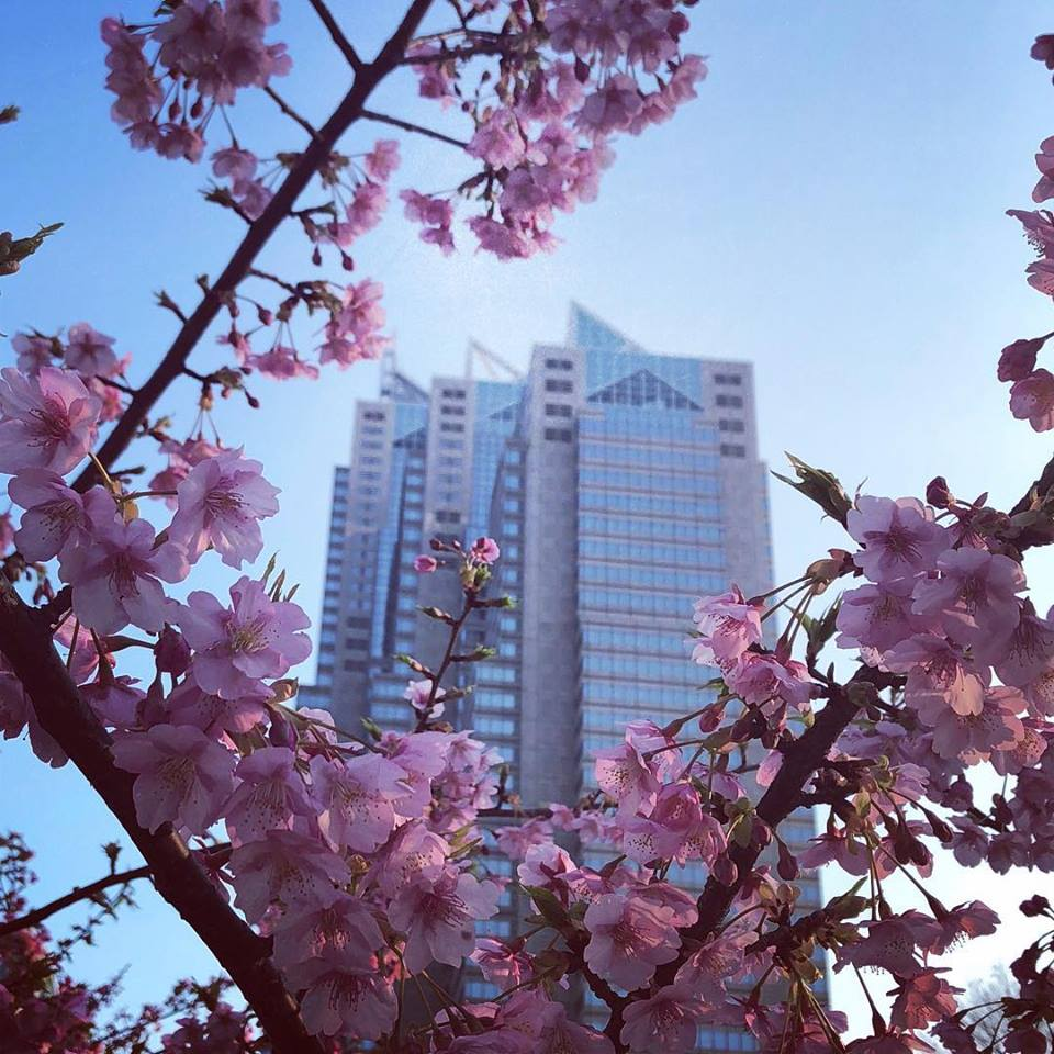 The #cherryblossom is now right around the corner! The early blooming cherry blossom flower, #Kawazuzakura, is now blossoming at #ShinjukuCentralPark. #shinjuku #shinjukuparktower #河津桜 #新宿中央公園 #新宿 #新宿パークタワー #luxuryispersonal #jubileeattheparkpic.twitter.com/bqML6HmVAb