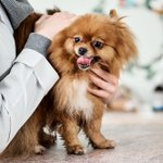 #CBD and #cannabinoids for #pets is a growing point of #conversation. Do you know the distinction between #marijuana and #hemp? Or how #phytocannabinoids affect the #endocannabinoid system? Find out more below! https://t.co/m4lQuQZVX9
