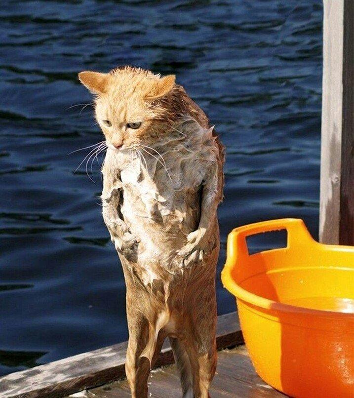 мокрая кошка демотиватор который находился под