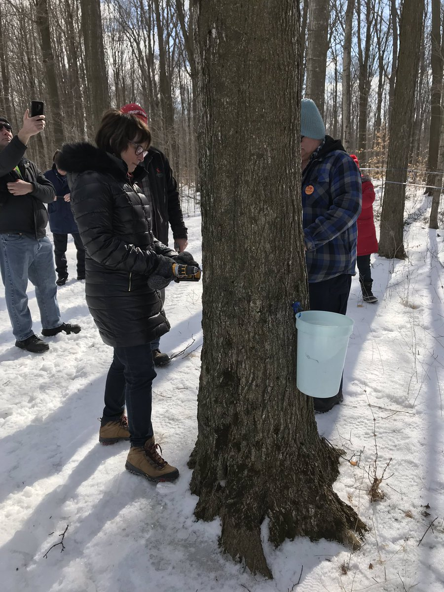9df70dd3c77 The first tree has been tapped! Best wishes to all  kitcon producers for a  great 2019!  Sandy Shantz  ElmiraSapfest  sweetontario  pic.twitter.com tBQOz99Rqm