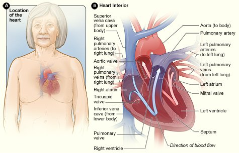 A1: Heart #valvedisease  remains a common cause of death & morbidity in the U.S., so it's important to raise awareness about it. Heart valves thicken & stiffen w/ age and now that people live longer, valve disease is an increasing problem.https://t.co/QZGgElOv0S  #ValveDiseaseDay