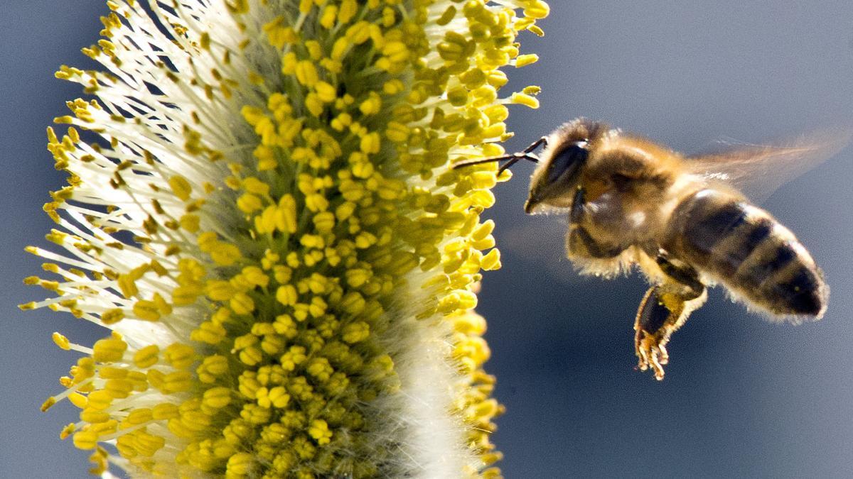 Bienensterben: Entschädigung dafür, dass Bauern keinen Schaden anrichten? Absurd! to.welt.de/mz8Hug4