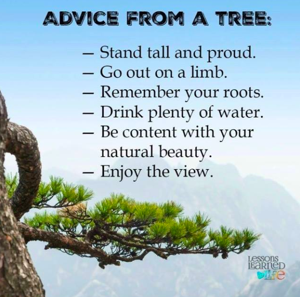 One of the oldest known living organisms gives us the simplest advise. #nature #positivepsychology #education