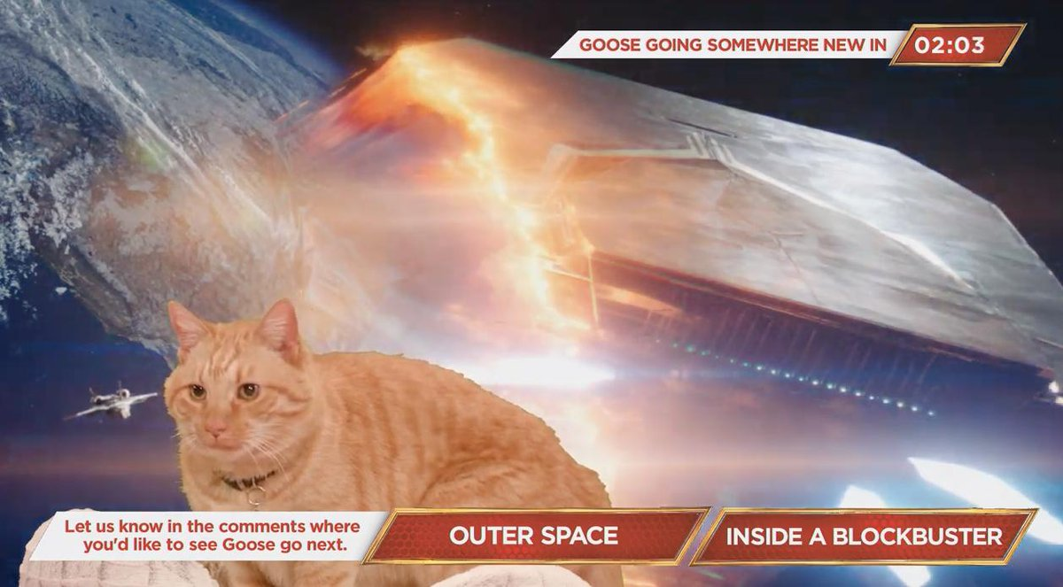&#39;Captain Marvel&#39; is live streaming Goose the Cat right now   https://www. youtube.com/watch?v=Uky_Y_ 7JevE &nbsp; … <br>http://pic.twitter.com/iIUYbobmZ1