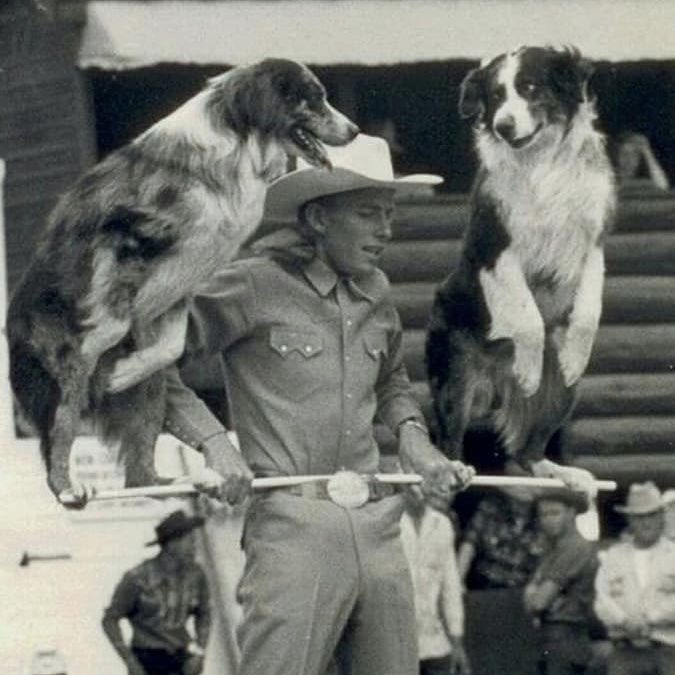 """Contrary to popular belief, the Australian Shepherd originated from California in the 1800's. The breed was dubbed """"Australian"""" because they originally herded sheep and other livestock from Australia. Although their title is a bit deceiving, Aussies are a true American breed! <br>http://pic.twitter.com/MhlkCBDeXn"""