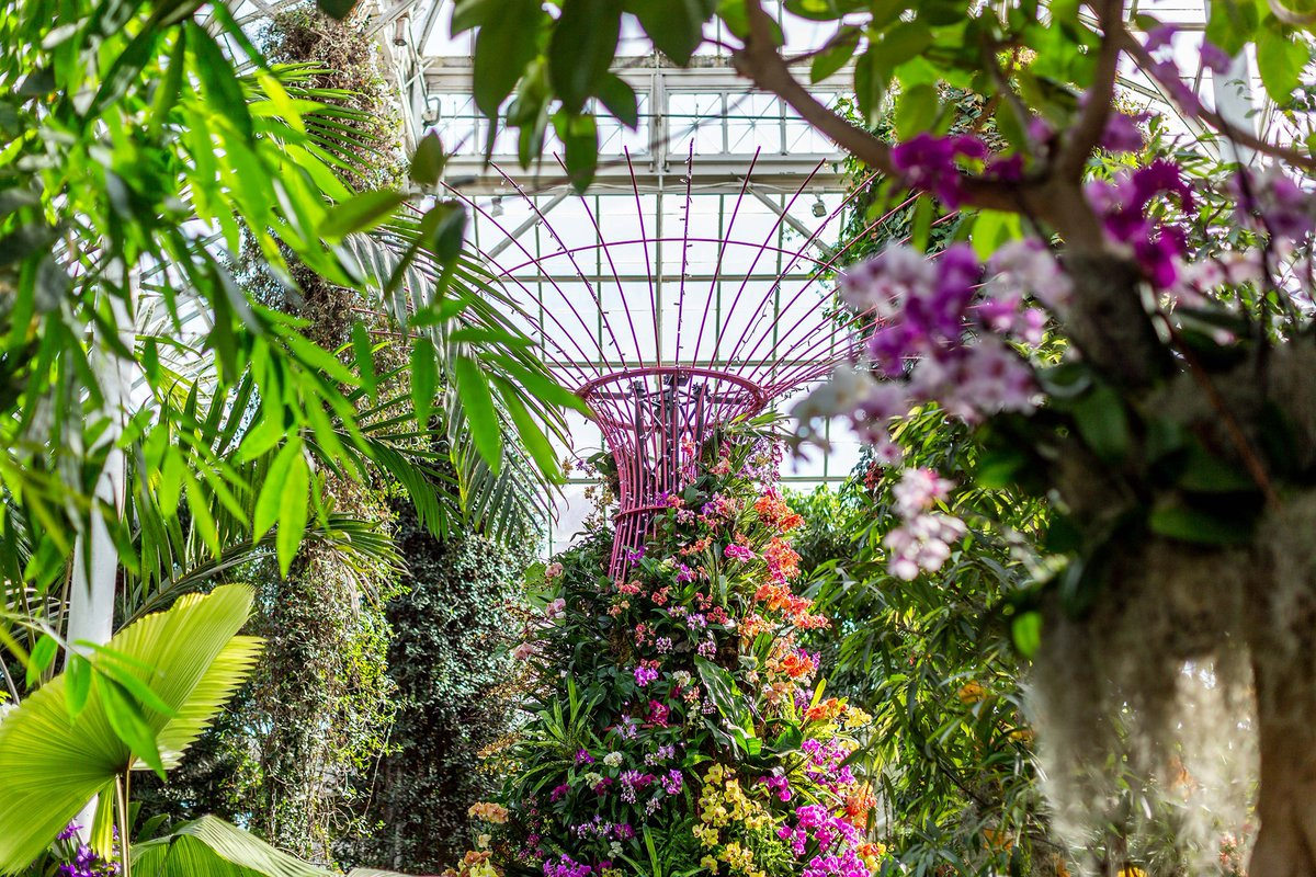 New York Botanical Garden On Twitter The Orchid Show Singapore