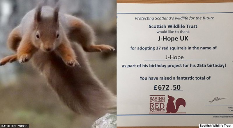 🐿️ 37 Scottish red squirrels have been adopted in @BTS_twt star #JHope's name.   Ask the #BTSARMY and they'll get it done! 💜#BTS 👉  https://t.co/LDvwAG4fGt