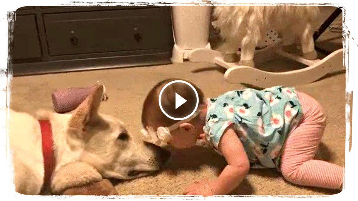 День рождения, приколы дети и животные видео 2018