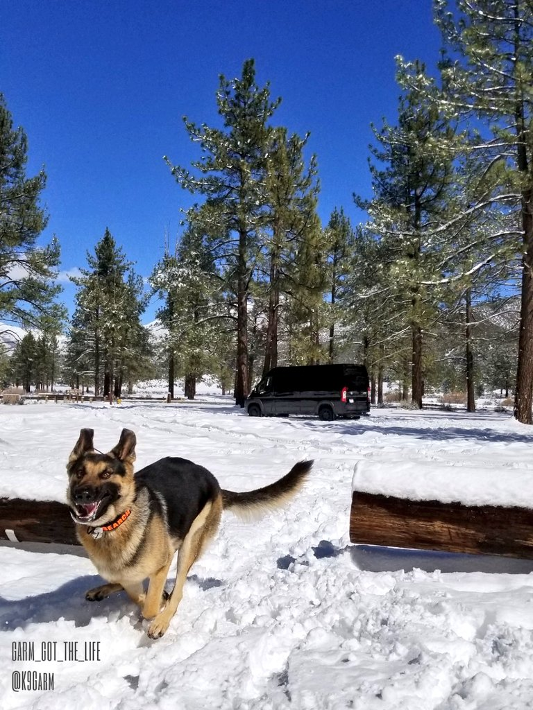 #Snow ! Clearly #moosedog is excited  Out near #Idyllwild at one of our favorote trail heads enjoying some snow on the way into the desert #K9Garm #SARK9 #dogsoftwitter #dog #dogs #germanshepherd #gsd<br>http://pic.twitter.com/IwUfYvrPxL