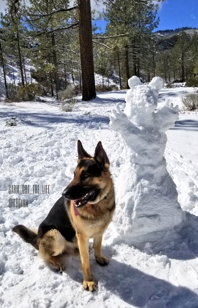 Papa made #moosedog a #SnowMan that strangely looks like a bear  #K9Garm #SARK9 #dogsoftwitter #dog #dogs #germanshepherd #gsd<br>http://pic.twitter.com/blDzMBzC3m