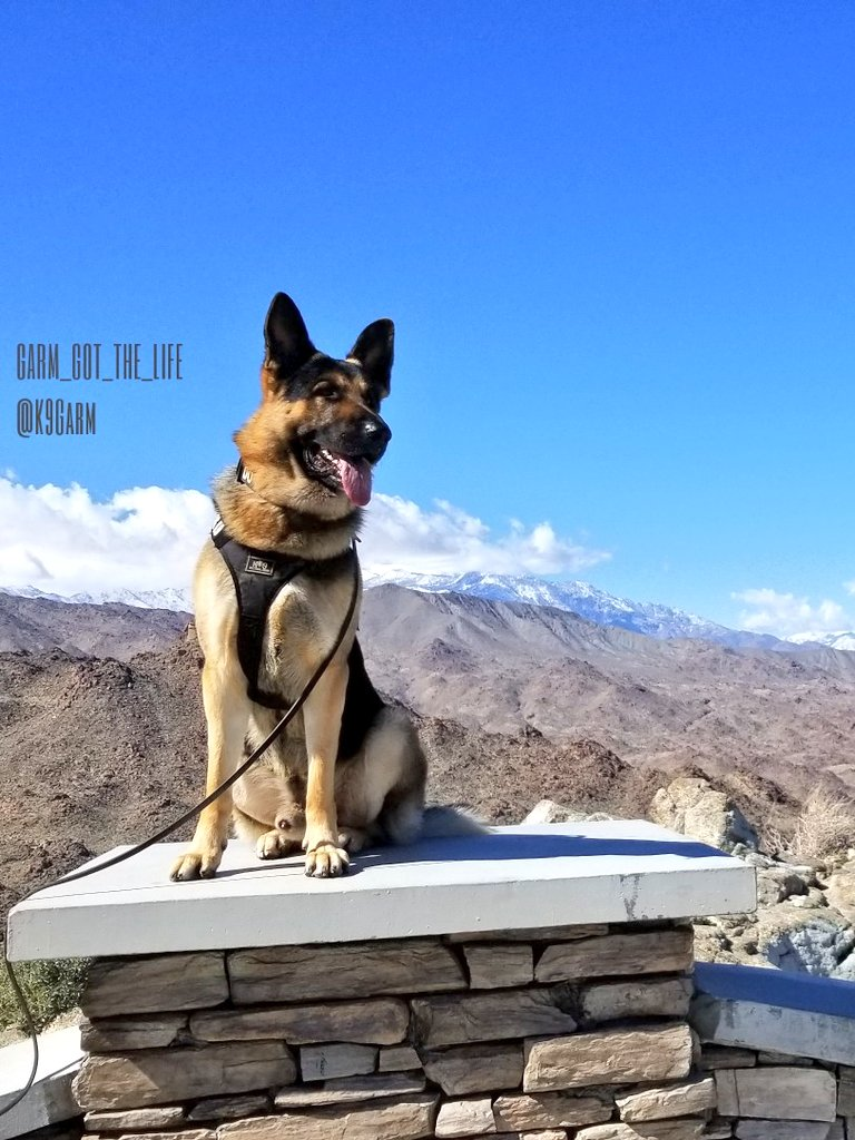 From the mountains to the desert, from the snow to the sand. I&#39;m not a huge fan of SoCal for its politics but It sure has a lot to offer when you consider I can go from the coast, to the mountains, to the desert all within 2 hours #K9Garm #moosedog #SARK9 #dogsoftwitter<br>http://pic.twitter.com/aiDLjAmuTG