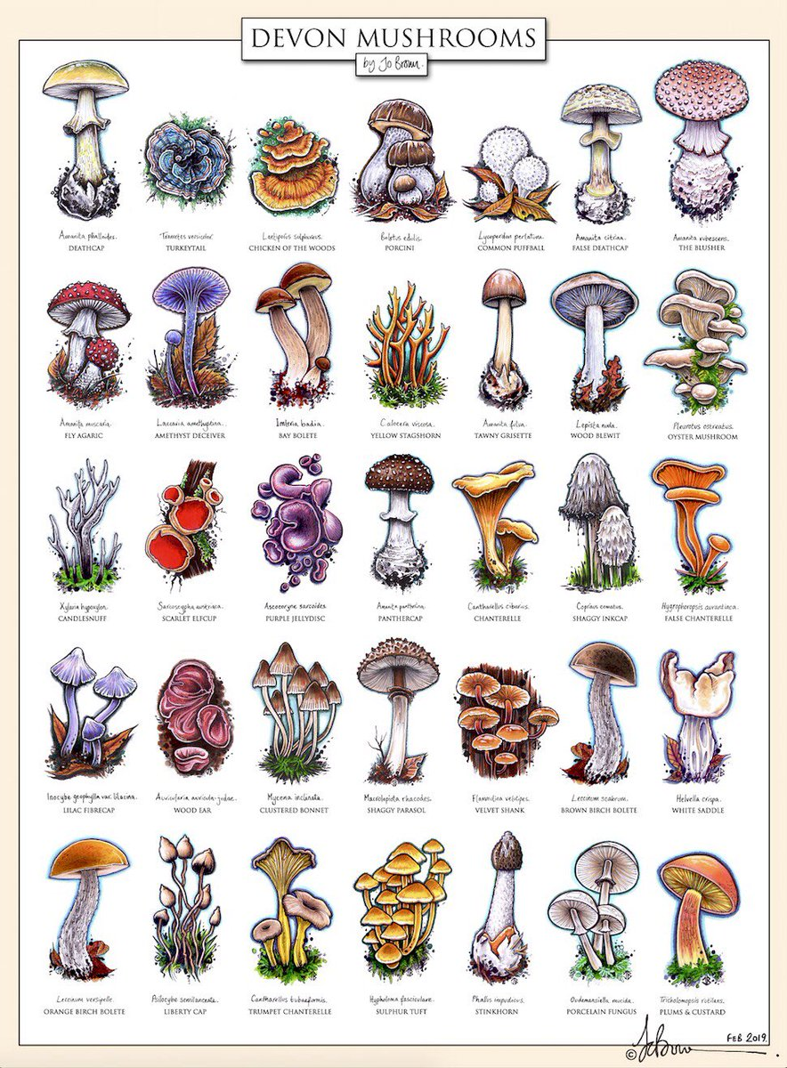 """Bernoid on Twitter: """"I've put together an ID chart illustrating some of the  mushrooms I've seen out & about in Devon. I've seen loads, this is just a  selection. #mushrooms #fungi #ID #"""