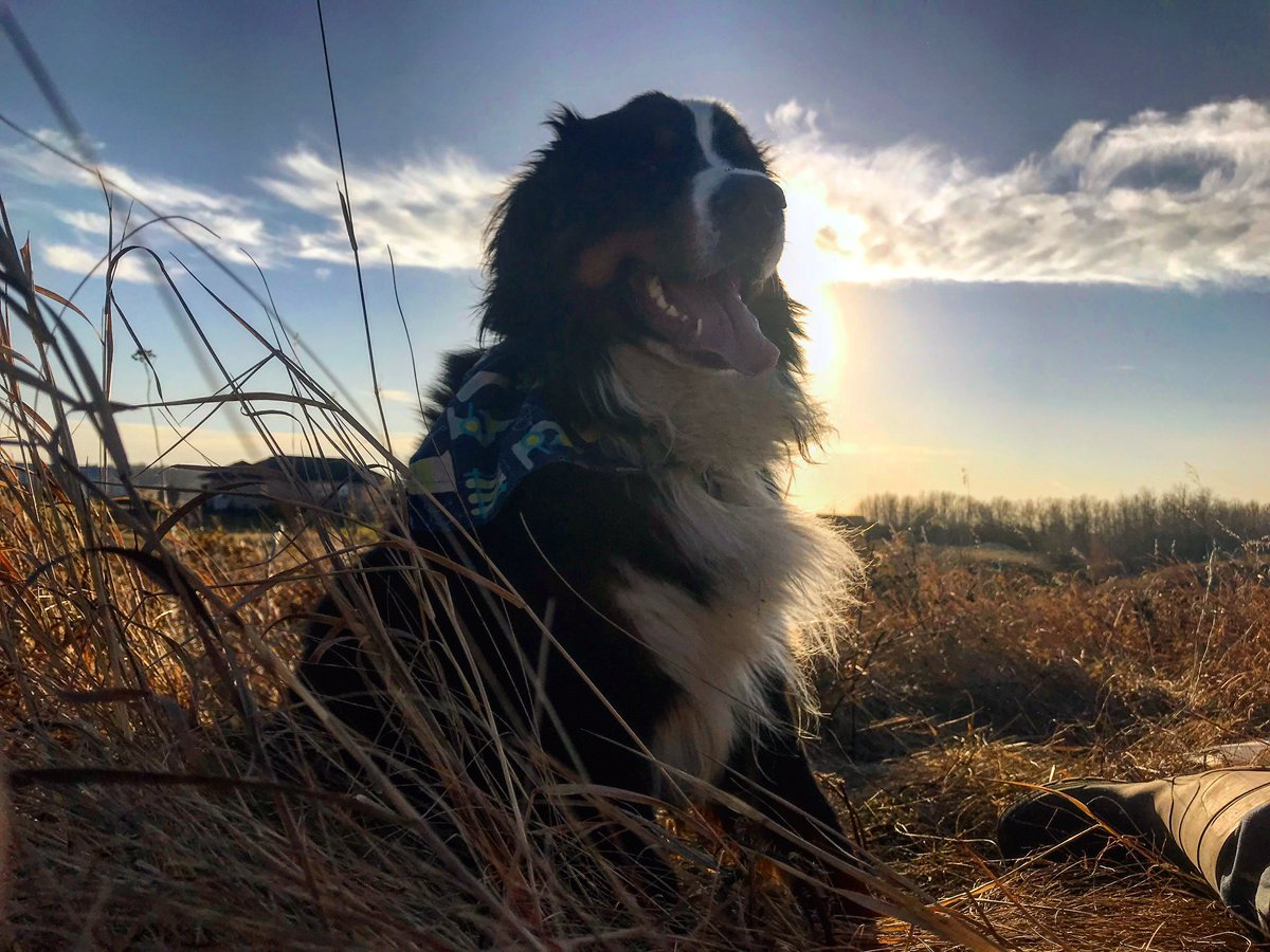 As we head into the weekend, remember Carl Sagan's words: The Earth-There is nowhere else, at least in the near future, to which our species could migrate. Visit, yes. Settle, not yet.  Earth is where we make our stand. Love our planet.  #science #dogs #dogsoftwitter <br>http://pic.twitter.com/d9Aaem2xkP