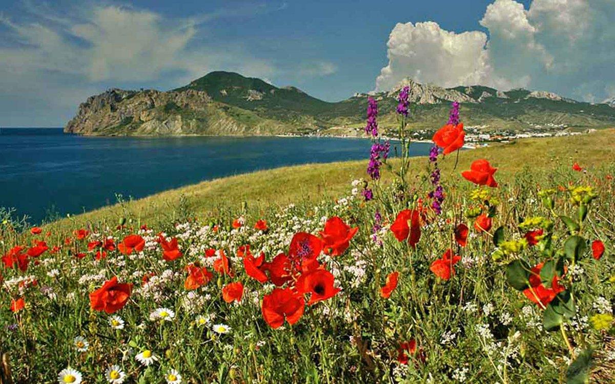 цветы крыма с картинками привел примеры
