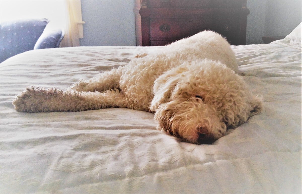 Theo's pup tip of the day: Oh, for sure you should work hard, use your time on this earth well, accomplish much. But even Broadway has an intermission. The Superbowl has a halftime. And your driving ambition needs a nap. <br>http://pic.twitter.com/6IFDhhz5iH