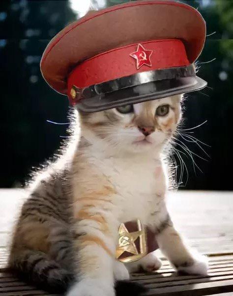 Анимация коты с днем победы, папам рубашка