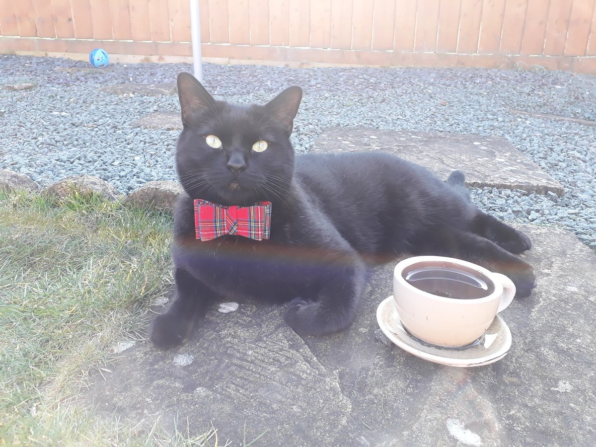 Pushkin - Would you like to join me for a nice cup of tea in the sunshine?  #CatsOfTwitter <br>http://pic.twitter.com/QH5rPiYno7