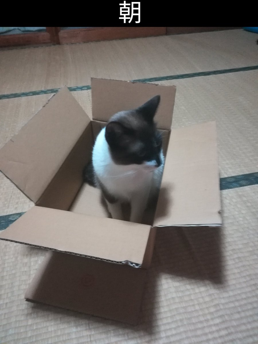朝 「猫ちゃんお利口に留守番お願いね」  帰宅後 「嘘やん」