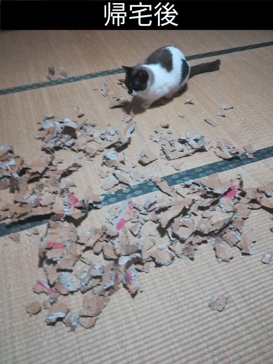 我が家の飼い猫にお留守番をお願いした結果→嘘だろ?な光景が