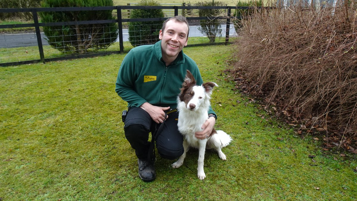 Laddie just loves a cuddle! He is a super boy with a fun and friendly nature - Sure to bring a smile to any face! Why not come and meet him? #collies #dogsoftwitter #dogsofinstagram #adopdontshop #cuddles @DogsTrust <br>http://pic.twitter.com/xVRygXTMFn