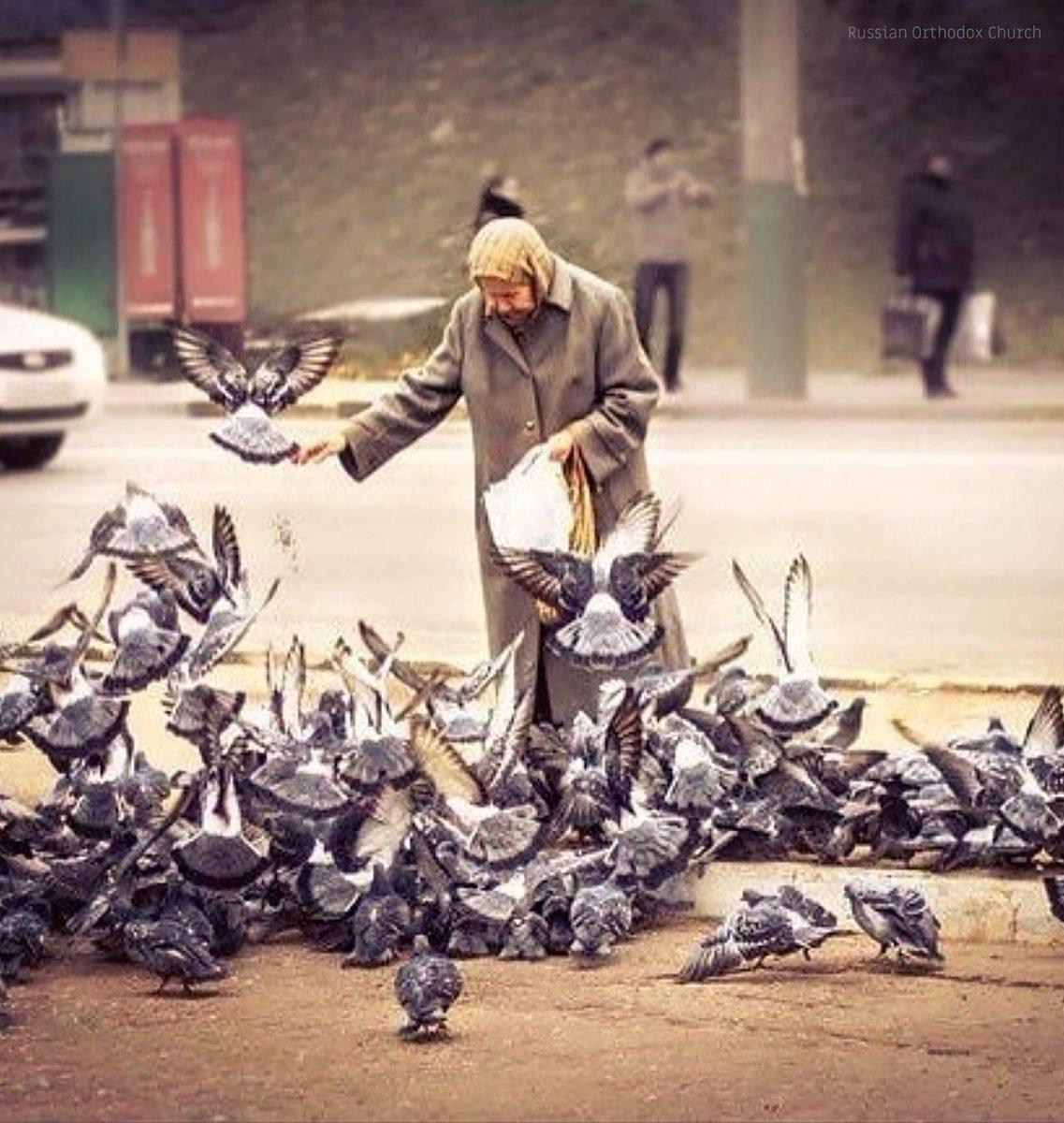 мопса, картинки старушка кормит голубей архитекторов