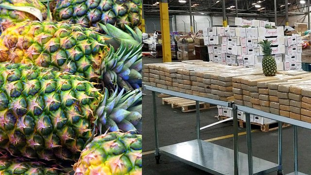 Over $19M worth of drugs found pineapple shipment http://dlvr.it/QzXsyl @FOX26Houston
