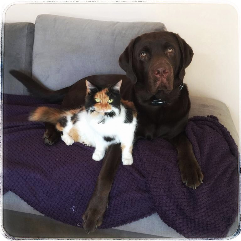 Non-music/rock/metal post.... but.. here's a photo of my cat &amp; dog, because metalheads loves cats n dogs, right? <br>http://pic.twitter.com/jUnyvp1yjv