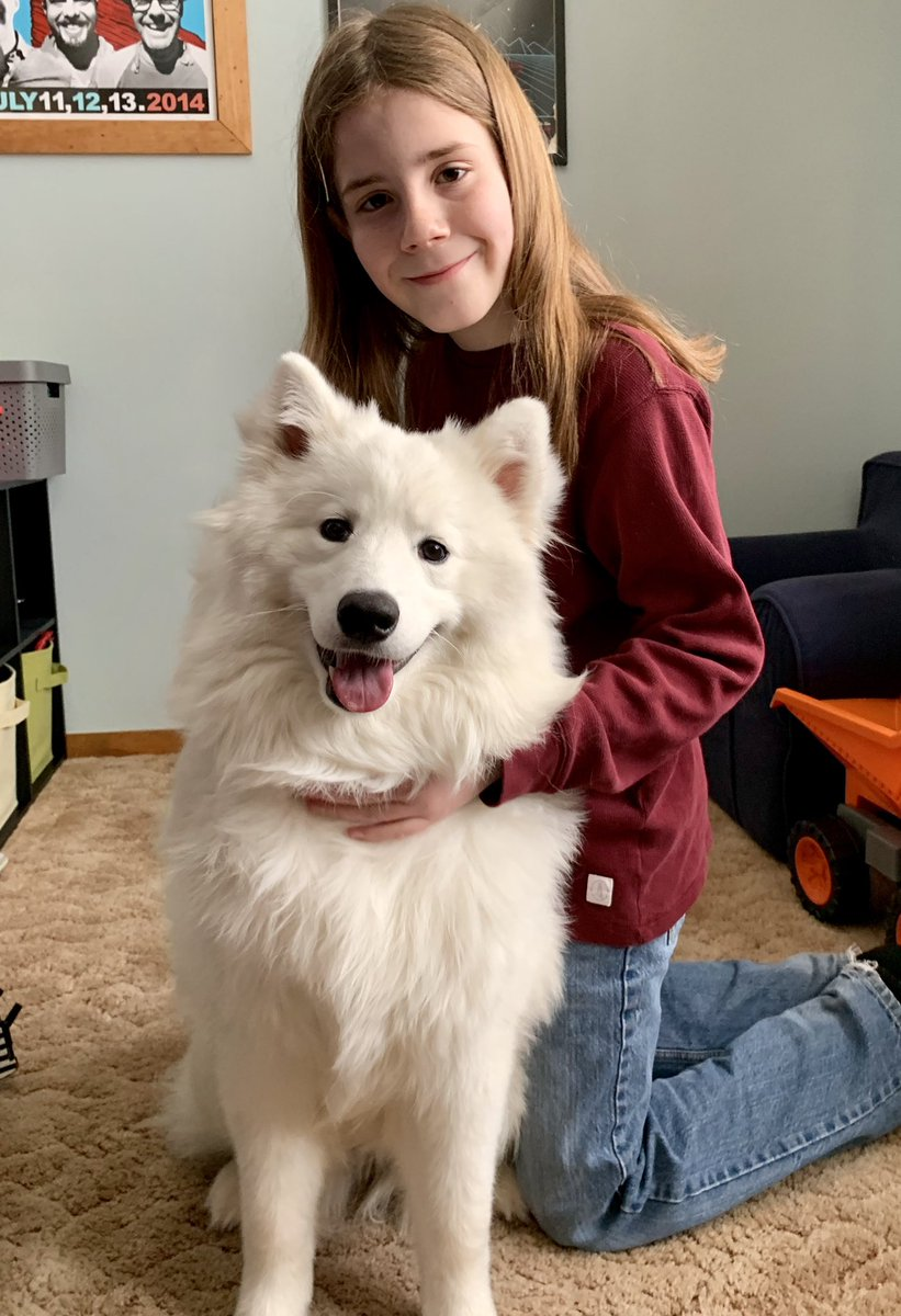 I pet Lucy. She is a 1 year old Samoyed who was rescued with 40 dogs from a puppy mill. Lucy is happy in her new home. She is mischievous and spunky. She hides the book or shoe she is chewing on behind a decoy toy so her caregivers won't see. Her favorite toys are the cats. <br>http://pic.twitter.com/23vBRJtjFd