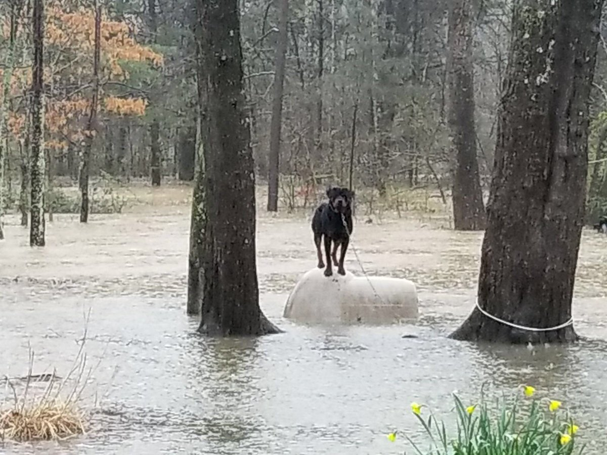 Knoxville Police Department Animal Control Officers have rescued several animals left chained and stranded due to flooding. Please remember your pets and make arrangements for their safety. <br>http://pic.twitter.com/W3wYwh4dk9