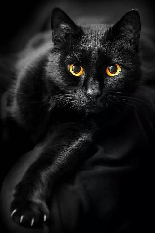 """It is in their eyes that their magic resides."" - Arthur Symons  #catsoftwitter, #cats  <br>http://pic.twitter.com/LZEro6IYzk"