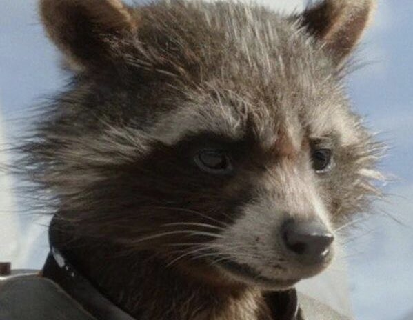 "#ratlivesmatter Our mascot raccoon ""Fishbone"" is cousins with Rocket from the MCU. Even though they're trash pandas we still love them. <br>http://pic.twitter.com/oq0UWGCajb"
