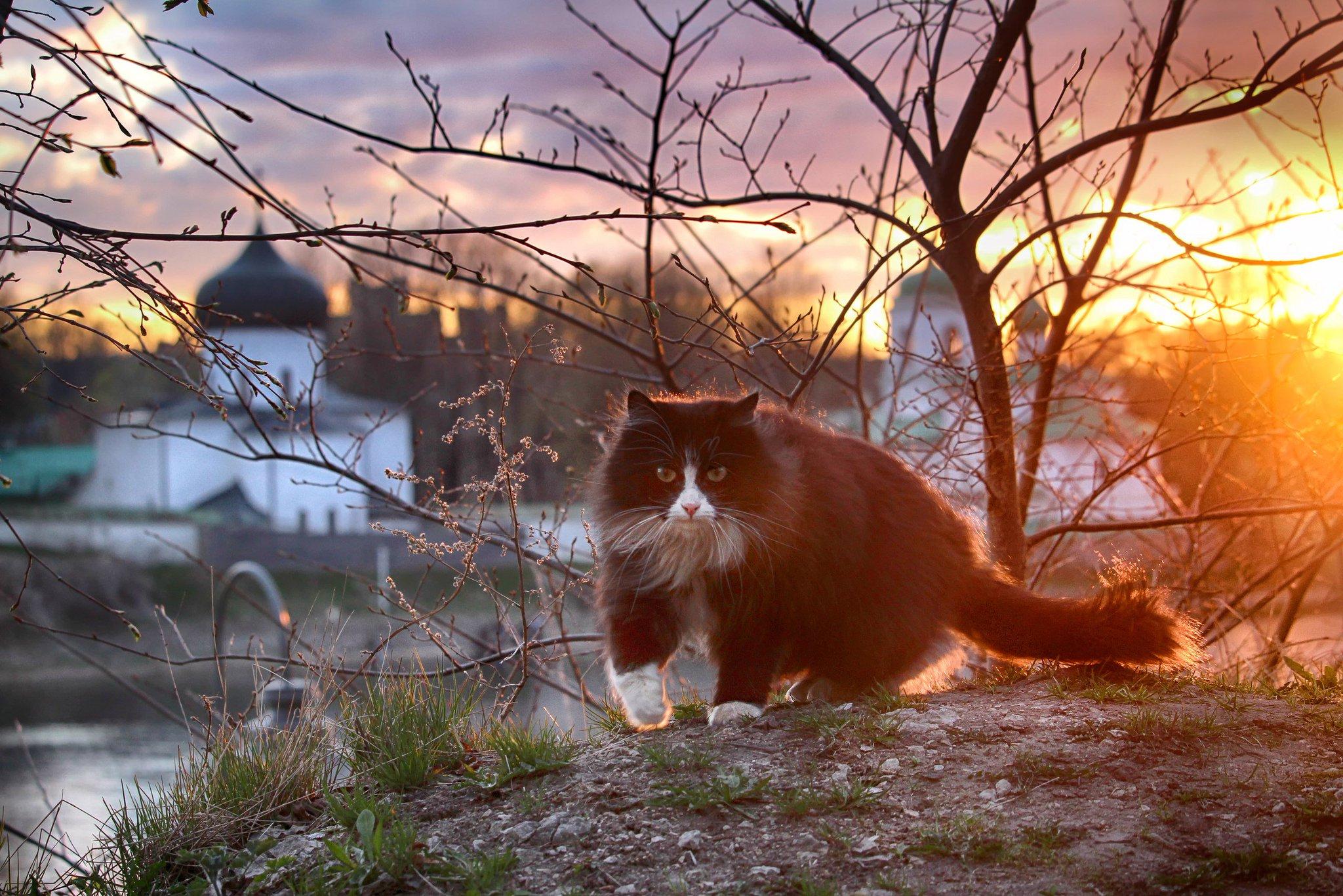добрались наиболее конкурс псковских фотографов пейзажистов как один
