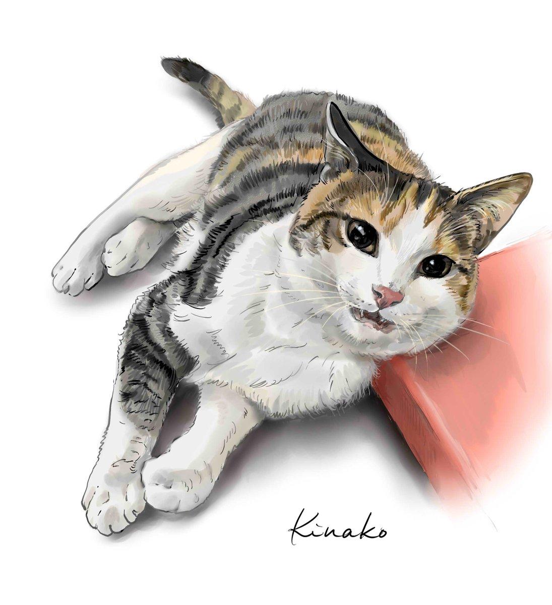 きなこ 猫の絵を描いています On Twitter 野良猫の子猫 三毛猫の