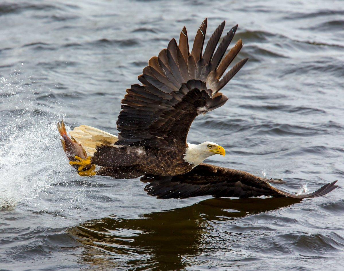 Conviccion Na Twitteru Si Quieres Volar Con Las águilas