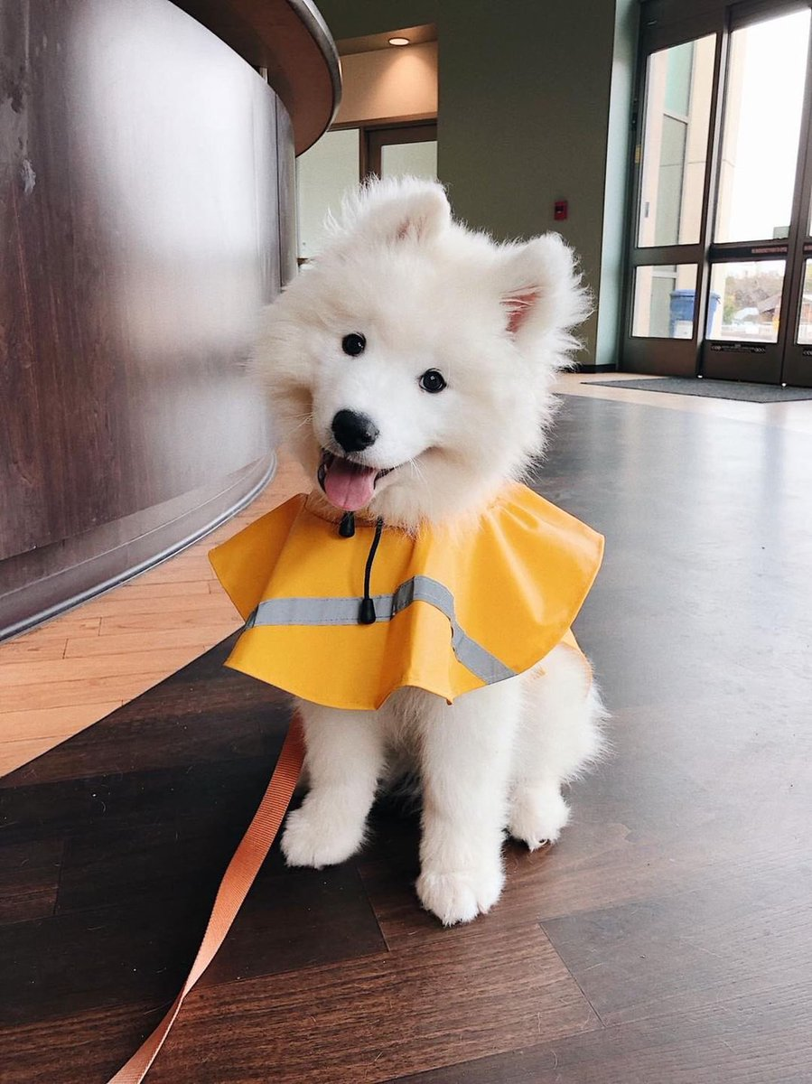 This Is Kumo Hes Proud To Announce He Picked Out His First Raincoat The Sky Droplets Dont Stand A Chance Against Him Now 14 10 Really Hopes You Like