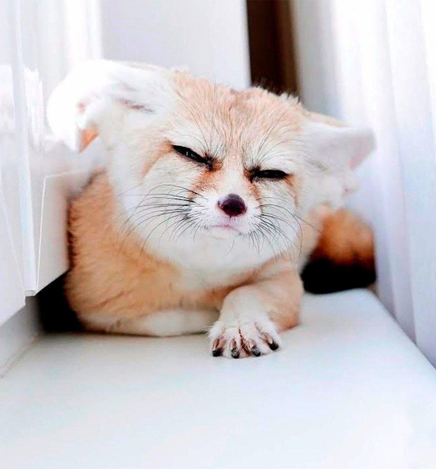 Прикольные картинки спите что ли, смешные картинки подставка