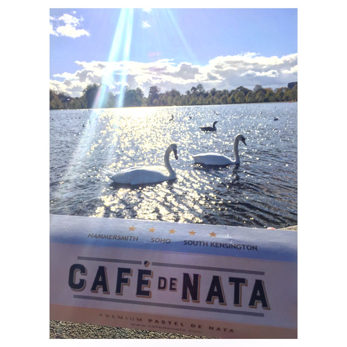 Spring is it you out there? 🦢 Wishing for more morning commutes like this one! 💕 #springinlondon #february #london #swans #sunnyinlondon #morning #hydepark #kensingtonpalace #kensingtongardens #cafedenata #commute #coffee #pasteldenata #pasteisdenata #monday #cafe #nomnom