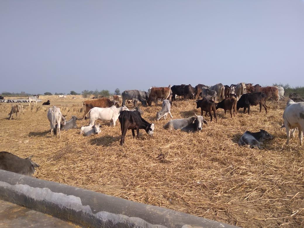 Cm महोदय का आगमन 27फरवरी को फतेहपुर में हो रहा है जहाँ पर चाटुकार और वाह वाही लूटने वालो की भीड़ रहेगी लेकिन अन्ना जानवरो के लिए जो गौशाला बनवाई गई है उसमें जानवर तो है लेकिन चारा नही है कई जानवरो की मौत हो गई है लेकिन फतेहपुर के आला अधिकारी मौन है