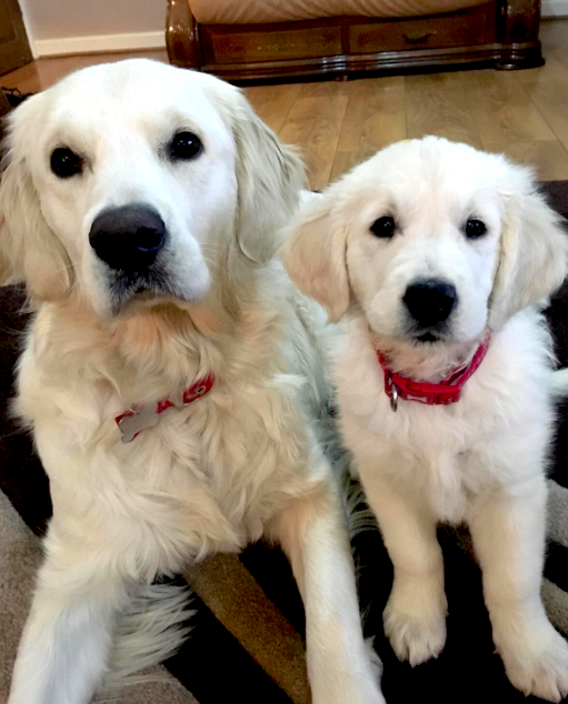 There&#39;s still time to enter our #K9LoveIt #LoveYourPetDay #contest - it&#39;s #LoveYourPetEVERDAY to us  Vote daily for the rest of the week for your fav photo like this entry from @goldenlily2017 There&#39;s not one but THREE cash prizes on the line  Vote on  http:// k9love.com  &nbsp;  <br>http://pic.twitter.com/ik0Ywel0P0