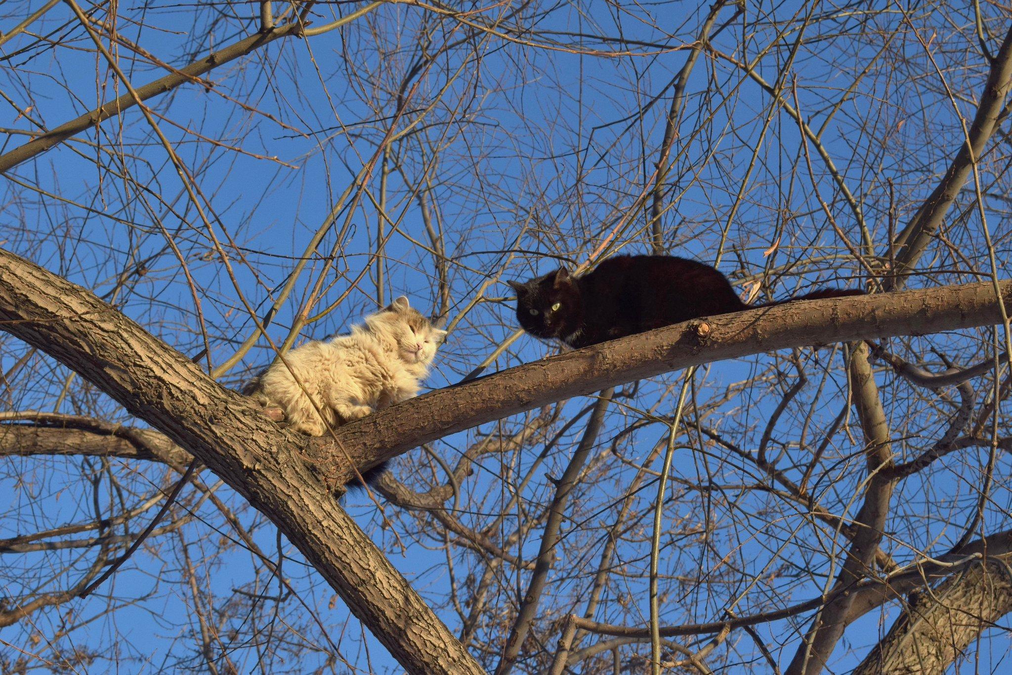 замесов картинки коты прилетели візерунку