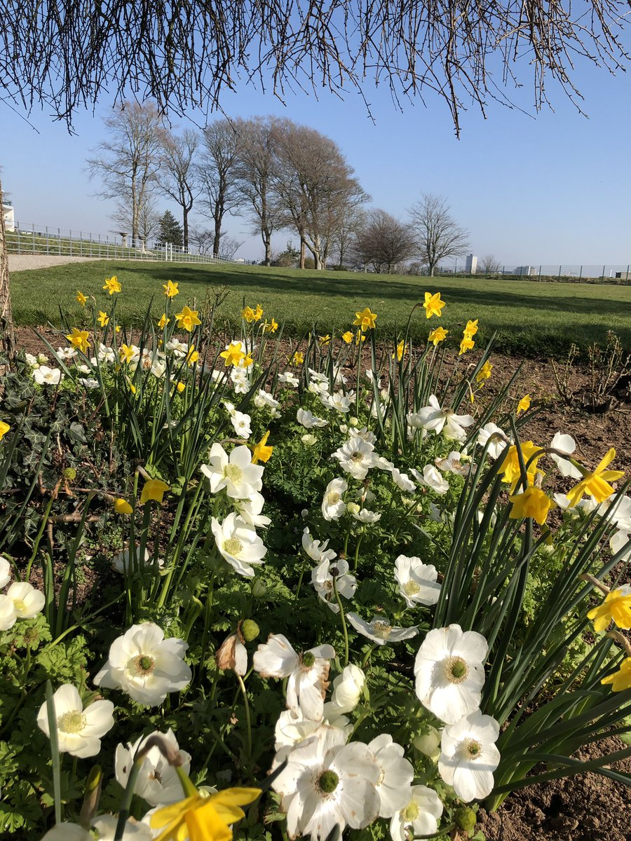 Spring has sprung at Mount Wise #springbulbs #lovingthesun  Feature Image