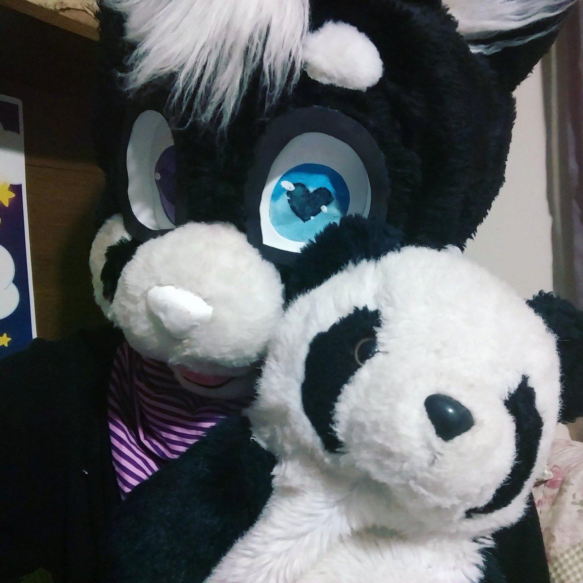 "Fursuit Panda daieny schuttz on twitter: ""pandas #panda #panda"