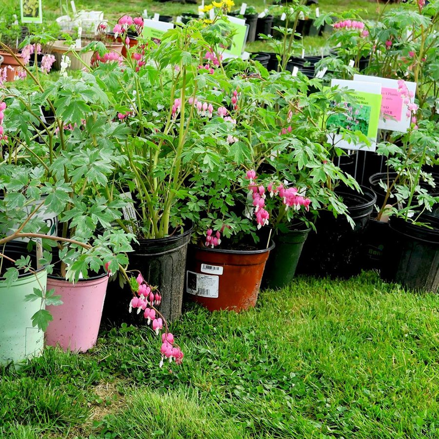 Whats on Appleby in Eden Valley: Plant Sale