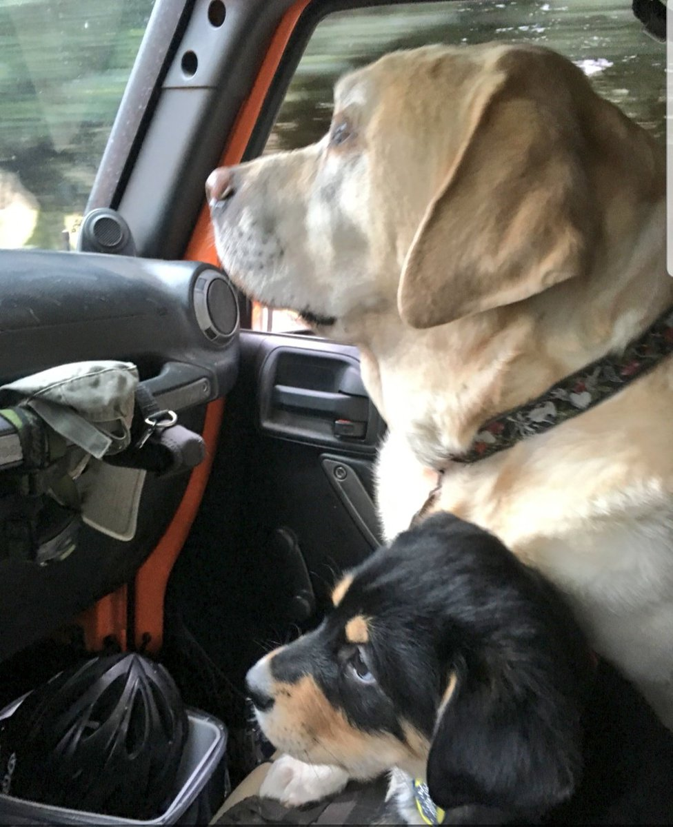 Cool Gus: Lab of Leisure on Twitter: