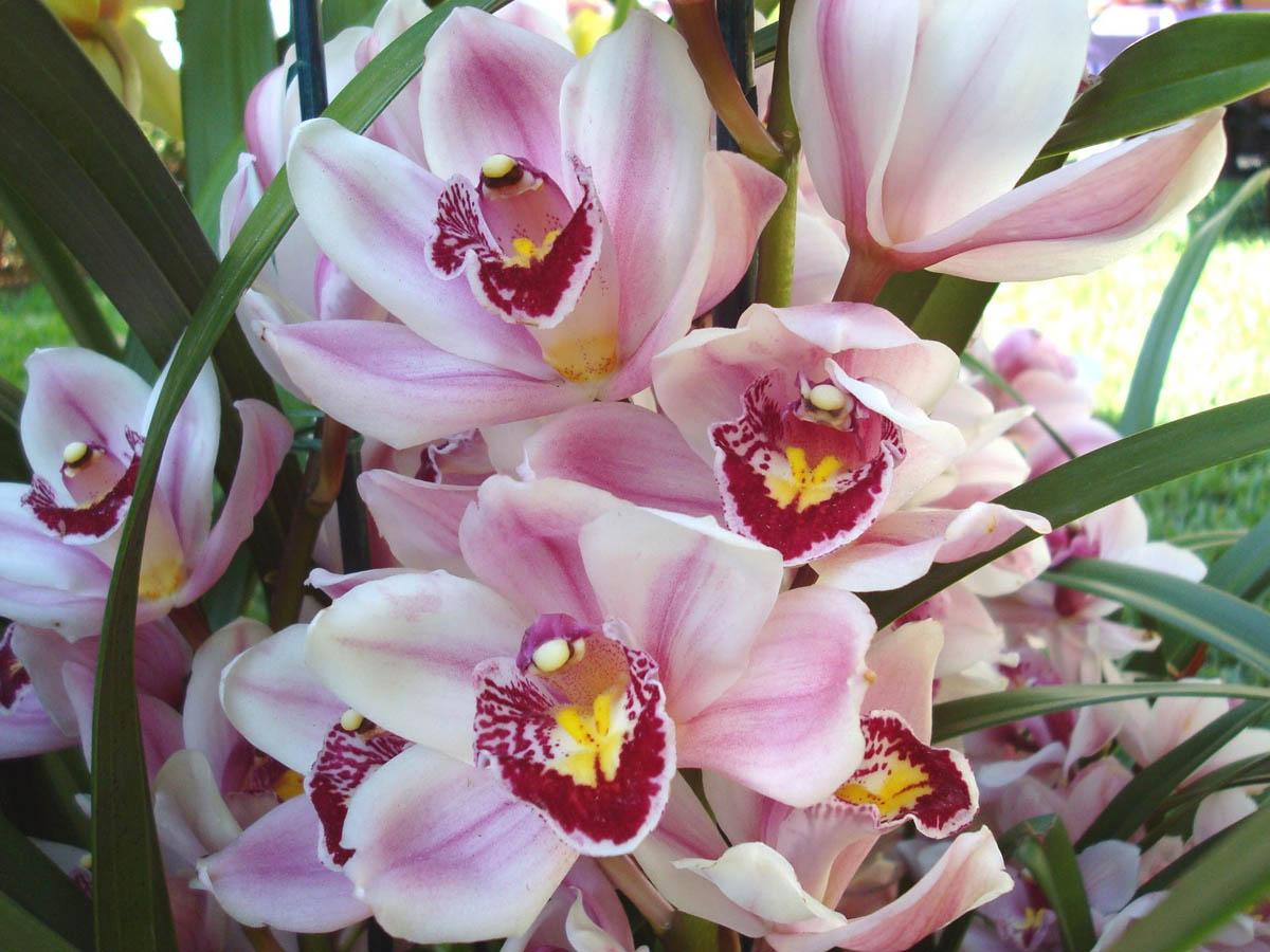 Полезные цветы для квартиры с фото выбор для
